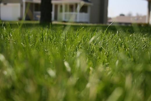 Grass_spring_2007_008_2
