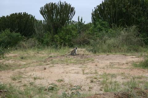 Africa_2007_590